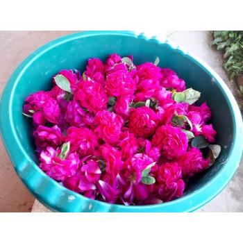 Petale de trandafiri ecologici uscate/p/10gr.