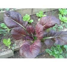 O noua planta revolutionara introdusa in premiera in Romania de catre Biodumbrava – Red Mustard!